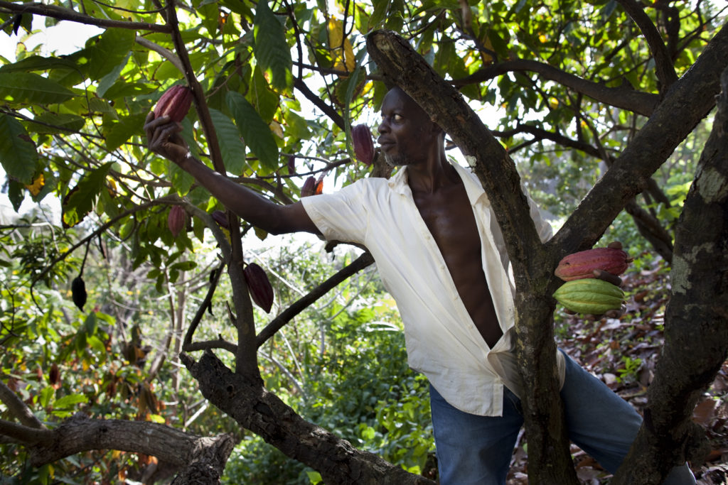 Grenada Chocolate Company farm crew on Gro Cocoa land, February 2015. Photo by Tom Coady.