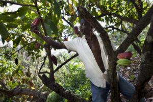 Grenada Chocolate Company farm crew on Gro Cocoa land, February 2015. Photo by Tom Coady.